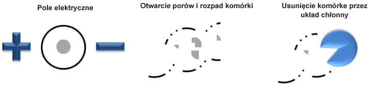 schemat_IRE